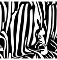 zebra seamless pattern black and white vector image