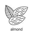 almond linear icon