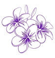 Beautiful Hand Drawn Plumeria Flowers vector image