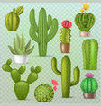 cactus botanical cacti green cactaceous vector image vector image