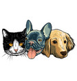 cat and dog characters best friend forever vector image vector image