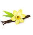 realistic detailed 3d vanilla flower and pods vector image