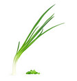 realistic of young green onion vector image