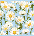 camomile seamless pattern vector image vector image