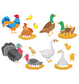 farm birds poultry chicken goose duck bird and vector image vector image