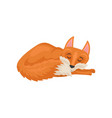 flat design of sleeping red fox mammal vector image vector image