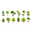 cartoon tree simple flat forest flora coniferous vector image