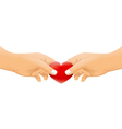 hands with love concept vector image