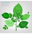 Infographics Bio Tree vector image