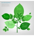 Infographics Bio Tree vector image vector image