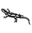 salamander vintage vector image vector image
