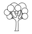 tree with round shapes branches trunk vector image vector image
