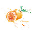 watercolor fresh orange vector image