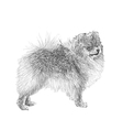Dog 08 vector image