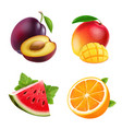 fruits orange plum watermelon and mango vector image vector image