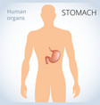 location of the stomach in the body the human vector image vector image