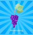 winemaking process icon vector image