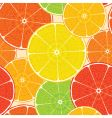 abstract citrus vector image vector image