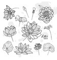 set of lotus flower in different views bloomed vector image vector image