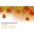 autumn background decor with autumn maple leaves vector image