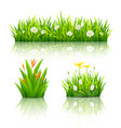 beautiful flowers with green leaves collections vector image vector image