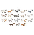 cats breeds side view and muzzle set collection vector image