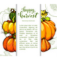 colorful pumpkin hand drawn vector image