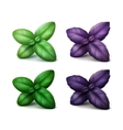 set green red purple basil leaves on background vector image vector image