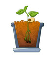 bean plant growing icon cartoon style vector image vector image