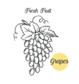 grapes in old ink style vector image
