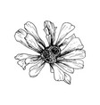 hand-drawn helenium autumnale flower sketch vector image vector image