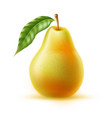 realistic fresh pear with leaf green fruit vector image