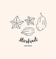 starfruit graphic drawing exotic fruit sketch vector image