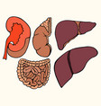 healthy viscera system part vector image