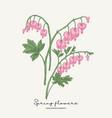 hand drawn dicentra pink heartshaped spring vector image vector image