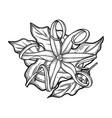 graphic ylang ylang design vector image vector image