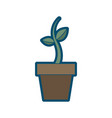 potted growth plant natural flora botanical vector image