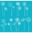 Set of dandelions