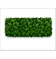 boxwood decorative fence vector image vector image