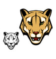 cougar puma or mountain lion animal head mascot vector image vector image