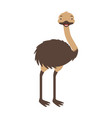 emu australian fauna on withe background vector image vector image