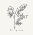 hand drawn dicentra heartshaped spring flowers vector image vector image