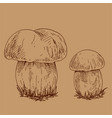 hand drawn outline of edible mushrooms vector image vector image