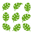 eco green color south tropical monstera leaf logo vector image vector image