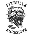 head of angry pitbull vector image vector image
