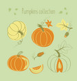 pumpkins collection vector image