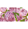 pink peony flowers card background vector image vector image