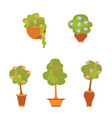 plants and flowers in pots flat style vector image
