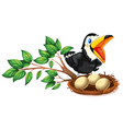 A black bird watching the nest with eggs vector image vector image