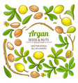 argan elements set vector image